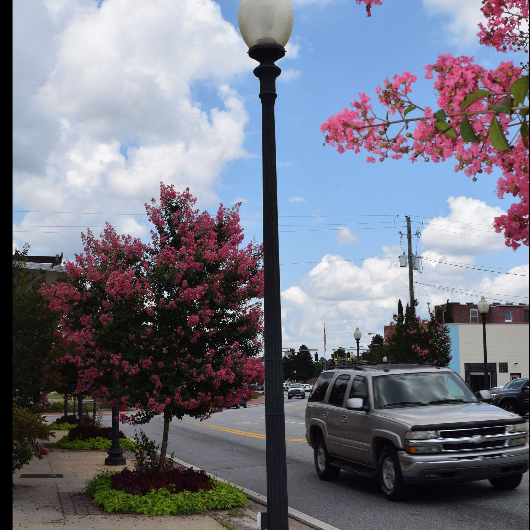 Blooming trees and lamp post on Caroline Street, Milton