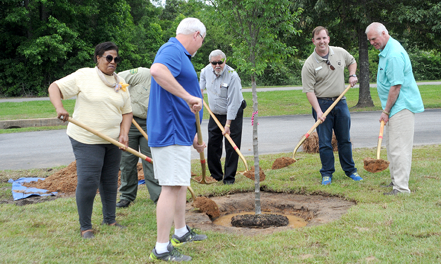 Arbor Day tree planing photo